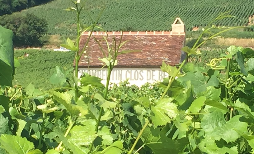 Grand cru of Gevrey-Chambertin in Burgundy